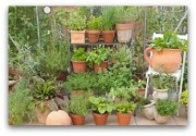 How to grow a vetical vegetable garden