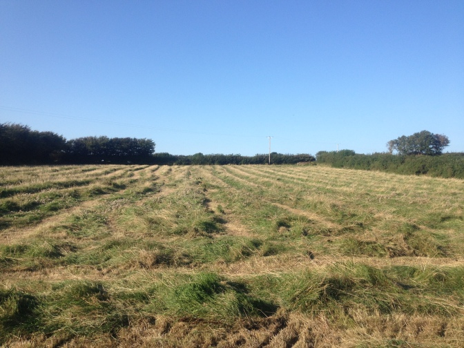 Look after your planet presents organic haymaking
