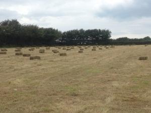 LAYP small hay bales