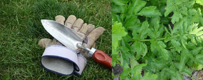 Gardening and PPE